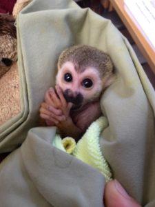 squirrel monkey1