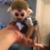 squirrel monkey4