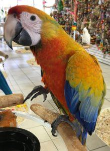 Camelina Macaw11