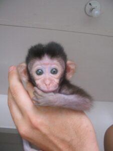 Capuchine1